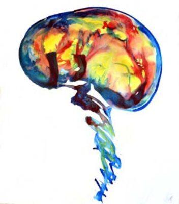 Illuminated Brain